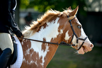 Champlain Valley Horse Trials