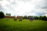 Horses with Main Lodge